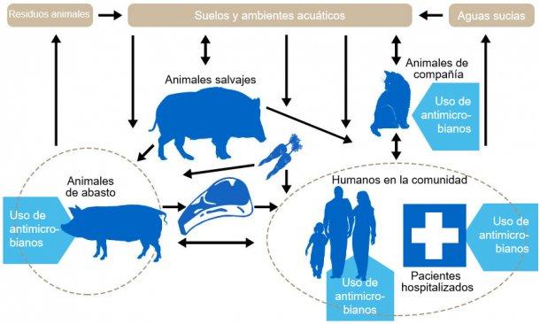 Flujo de determinantes de resistencia a antibióticos entre los de los diferentes reservorios. En azul se indica los puntos donde se administran antibióticos. http://www.effort-against-amr.eu/