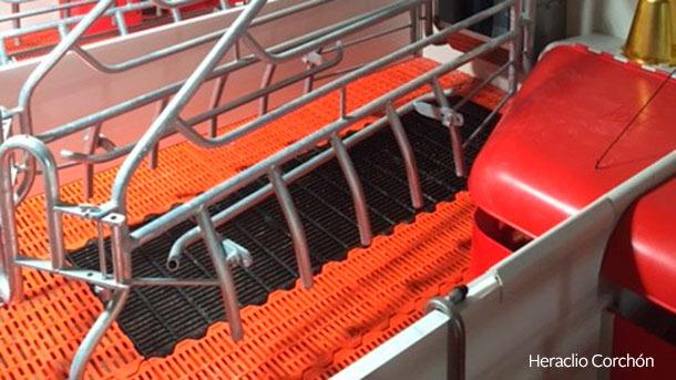La combinación más utilizada es suelo de plástico para el lechón y de fundición para la cerda.