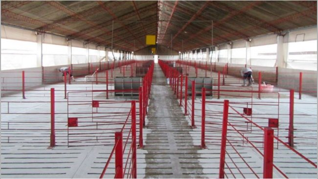 Foto 3. Limpieza y desinfección de instalaciones.