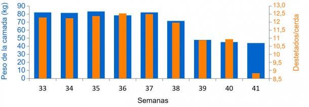 Gráfica 3. Promedio de lechones destetados/hembra y kilogramos de camada, antes y durante el cuadro sanitario de PED (a partir de la semana 38).