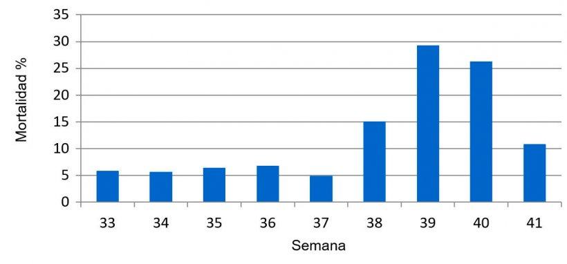 Gráfica 1. Porcentaje de mortalidad semanal predestete, previo y durante el cuadro sanitario de PED.