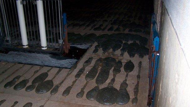 Foto 2: Formación de espuma en la fosa de purín.