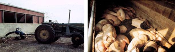 Foto 4: Hay que tener cuidado mientras se agita o bombea. En este caso los trabajadores sobrevivieron, pero los cerdos no.