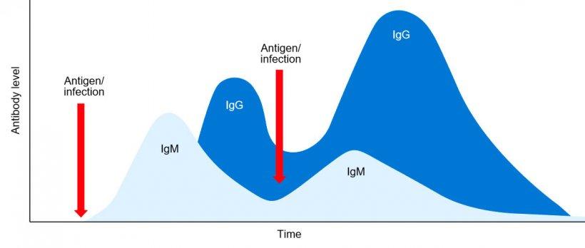 Figura 1: Cambio isotípico y respuesta inmune primaria y secundaria a exposiciones posteriores al mismo antígeno.