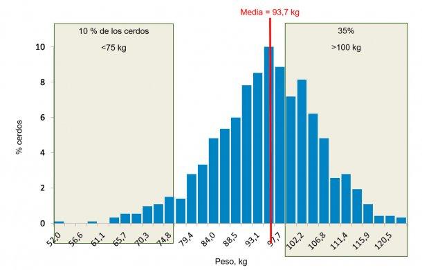 Figura 5. Distribución de pesos al final del engorde. El 35% de los cerdos pesan más de 100 kg, mientras que el 10% están por debajo de los 75 kg.