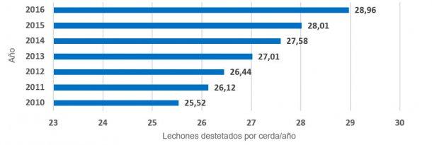 Gráfica 3.- Evolución media de lechones destetados por cada cerda productiva y año. El incremento de la producción ha sido de 0,49 lechones por cada cerda y año.