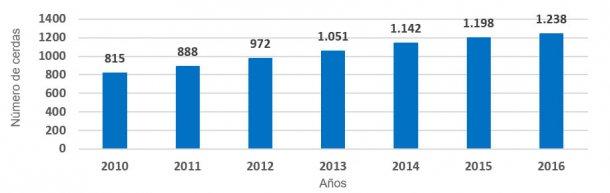 Gráfica 1.- Evolución tamaño medio de las explotaciones. Número de cerdas presentes por año (periodo 2010 – 2016). El incremento ha sido de 60 reproductoras por año.