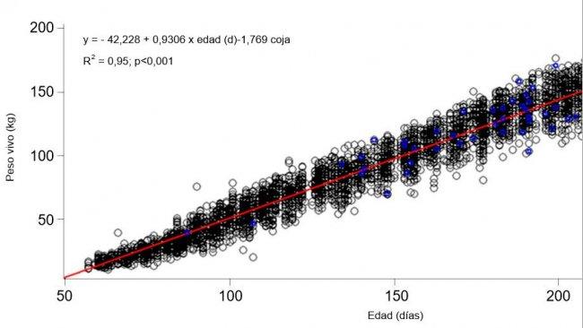 Gráfica 1. Evolución del peso vivo y la edad de las nulíparas cojas (azul) y no cojas (negro)