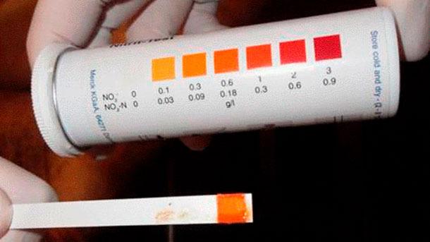 Figura 5: Tira para la detección de nitritosindicando envenenamiento por nitritos.