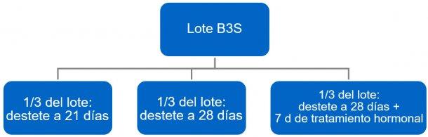 Figura 4. Proceso del paso de bandas a 3 semanas (B3S) a bandas semanales.