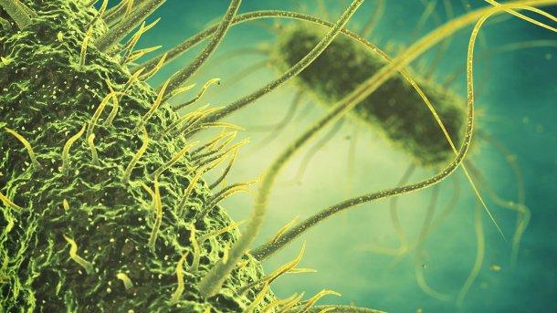 La salmonella sigue siendo una de las amenazas principales para los profesionales de la producción animal. Las mezclas de ácido propiónico y fórmico con aceites esenciales especialmente seleccionados han demostrado ser una solución potencial en la lucha contra este patógeno. (Fotografía: Shutterstock)