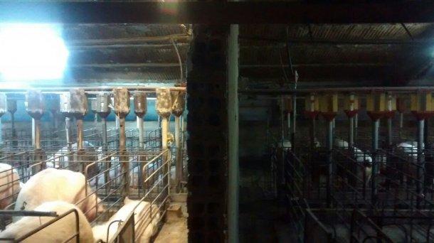 Foto 1. Diferencia de iluminación en la gestación antes y después de la instalación de un sistema extra de aporte de luz.