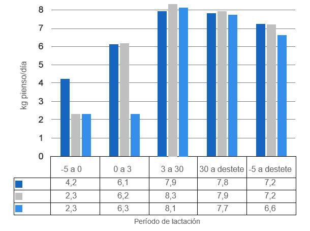 Gráfica 3. Consumo diario de pienso cuando las cerdas se alimentan a voluntad a partir de 5 días antes del parto (P -5d), del día del parto (P) o 3 días después (P + 3d).