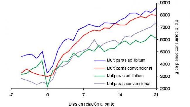 Gráfica 6. Consumo de pienso en lactación de cerdas alimentadas ad libitum y o con un programa convencional en el periparto