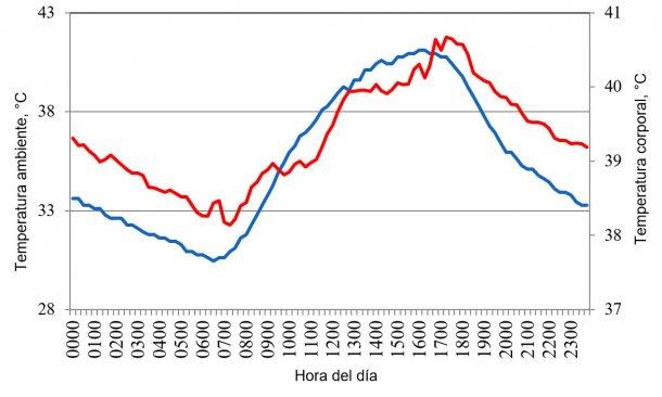 Figura 1. Variaciones en la temperatura corporal (rojo) de cerdos alojados en condiciones de estrés por calor, en respuesta a cambios en la temperatura ambiente (azul) durante un día típico del verano del año 2015 en el valle de Mexicali (Cervantes et al., 2017).