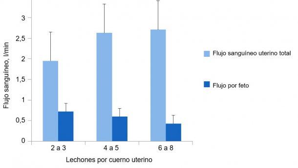 Gráfica 2. El flujo sanguíneo uterino total se adapta al tamaño de la camada, pero no lo suficiente para mantener el flujo sanguíneo por lechón. (Père, 2000).