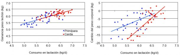 Ilustración 4. Por cada kg más consumido por la cerda en lactación aumenta el peso de los lechones en más de 0,5 kg y se reduce en más de 13 kg la pérdida de peso en multíparas (Cerdas) y más de 6 kg en primíparas. (NS Ferguson, 2010)