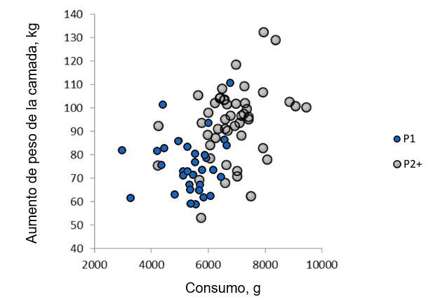 Ilustración 2. Relación entre el consumo medio diario de la cerda durante la lactación y la ganancia de la camada en primíparas y multíparas.(Nutreco R & D, 2015)