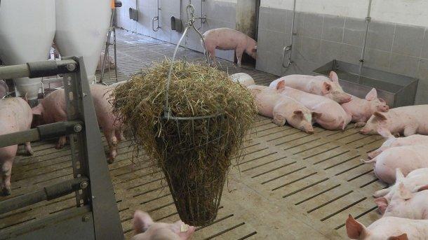 Foto 2. Material manipulable al alcance de los cerdos. Foto cortesía de Inge Böhne