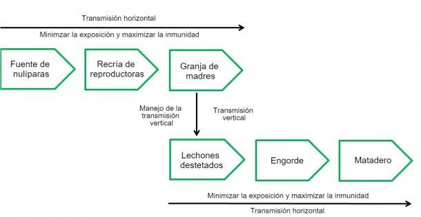 Cuadro 2: Distintas fases en la cadena de infección.