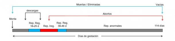 Gráfico 1: Días de gestación de la cerda y posibles pérdidas de cubrición a parto.
