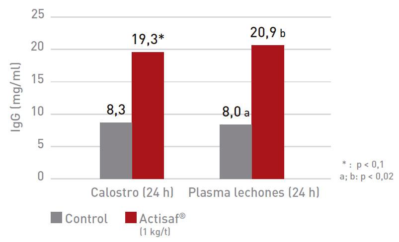 Aumento de la transferencia de inmunidad a través del calostro: Efecto de la suplementación con Actisaf® del pienso de cerdas en gestación sobre la concentración de IgG en el calostro y en el plasma de los lechones.