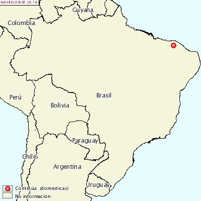 PPC Brasil