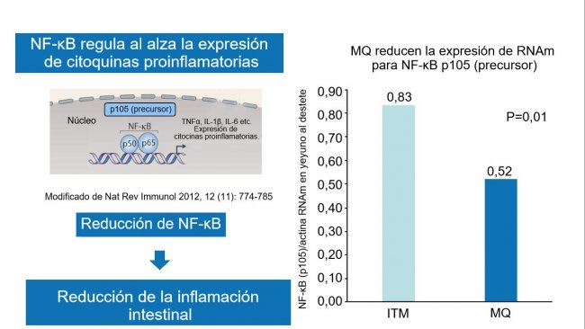 Figura 2. La reducción del factor nuclear NF-κB reduce la inflamación intestinal.