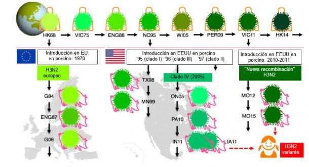 """Figura 1. Evolución de los virus de la influenza H3N2 en humanos y en cerdos. Los distintos tonos de verde indican diferencias antigénicas en el H3 HA; las cepas víricas se indican con el sitio (abreviado) y el año de aislamiento. Los virus humanos se introdujeron en la población porcina a principios de los 1970s en Europa y, a mediados de los 1990s y en 2010 en Norteamérica. Esto ha llevado a la situación actual de 3 clados distintos de VIP H3N2 (ver las cajas de texto), uno en Europa y dos en Norteamérica. Los clados norteamericanos de manera ocasional,saltan de vuelta, hacia la población humana y entonces se llaman virus """"variantes""""."""