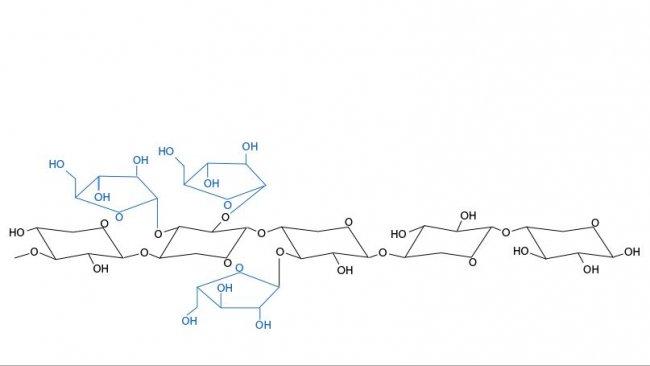 Figura 3. Estructura química de los arabinoxilanos. Las ramificaciones de arabinosa y su distribución varían entre cereales y entre variedades de un mismo cereal.