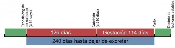 Figura 1. Cronograma de la exposición de las cerdas de reposición.