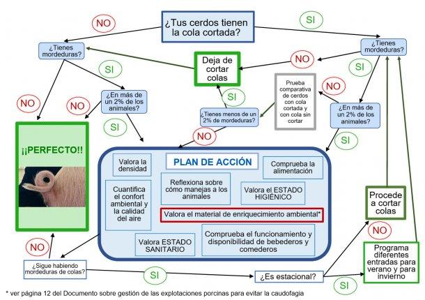 Árbol de toma de decisiones sobre el corte de colas elaborado por ANPROGAPOR