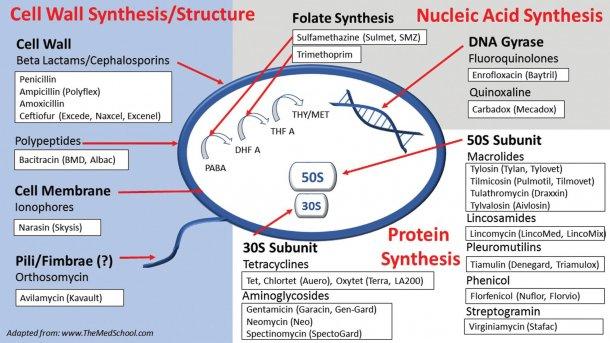 Los cuatro mecanismos de acción de los antibióticos.