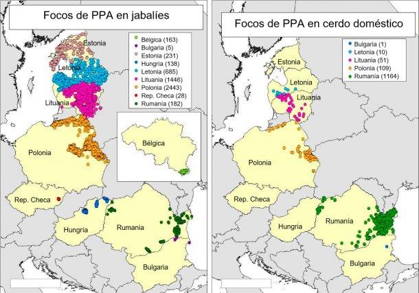 Mapa de focos declarados en Bélgica, Bulgaria, Estonia, Hungría, Letonia, Lituania, Polonia, Rep. Checa y Rumanía en 2018 (Fuente RASVE-ADNS).