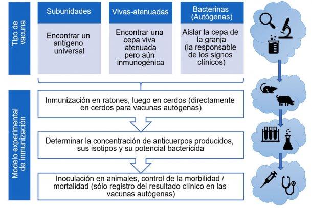 Figura 3. Pasos en el análisis de la eficacia de vacunas experimentales (por tipo de vacuna).