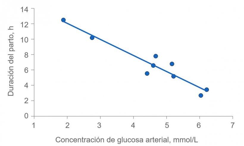 Figura 2: La duración del parto se prolonga mucho si a las cerdas se les agota la energía. Normalmente, la glucosa plasmática se mantiene constante en 4,5 (rango de 4 a 5) mmol / L, pero poco después de la alimentación supera este nivel y varias horas después de la alimentación, la glucosa plasmática puede verse comprometida si se agota el depósito de glucógeno en el hígado.