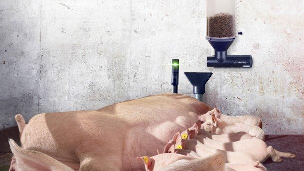 Nedap Farrowing Feeding, con el complemento opcional Nedap Activator puede reducir el desperdicio de alimento y aumentar la ingesta general, lo que resulta en una reducción del 50% en la mortalidad de corrales de parto y pesos de destete más elevados.