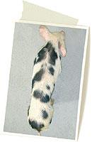 cerdo 2 meses con circovirosis