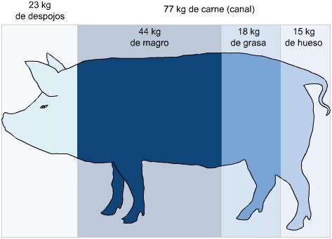 Proporciones del cerdo
