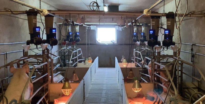 Imagen 1. Comederos electrónicos en maternidad instalados en una granja comercial.