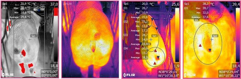 Figura 3: Imagen termográfica tomada mediante un dispositivo FLIR conectado a un Smartphone. Fuente: Ramis el al. 2017