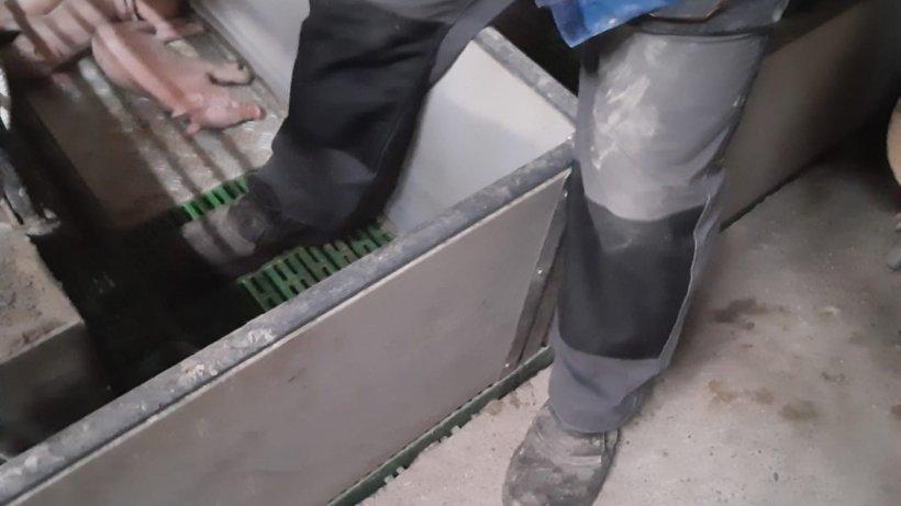 Imagen 1: En la medida de lo posible, debe evitarse pisar en el interior de una paridera. Foto cortesía de Ramaderies Duch.