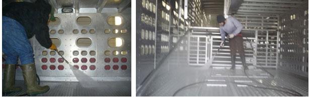 Imagen 3: Limpieza húmeda de partículas orgánicas finas mediante lavado mecánico del interior de un vehículo de transporte porcino. Este paso sigue al proceso de limpieza en seco. Por cortesía de Dr. Clayton Johnson de Carthage Veterinary Services.
