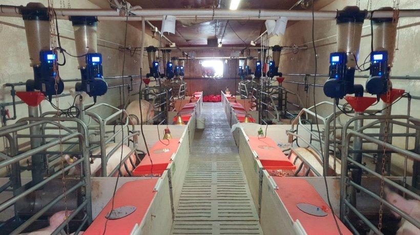 Imagen 1. Comederos electrónicos en maternidad instalados en la granja comercial (Centro de Experimentación Porcino, Aguilafuente, Segovia) donde se realizó el estudio.