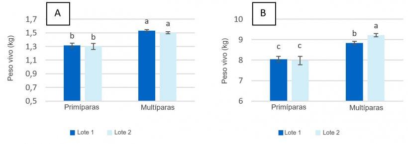 Figura 2. Peso vivo de los lechones en el momento del nacimiento (A) y el momento del destete (día 28 de lactación) (B) de cerdas primíparas y multíparas alimentadas con un máximo de 2,80 kg/día (Lote 1) y 4,20 kg/día (Lote 2) de pienso durante los días previos al parto.