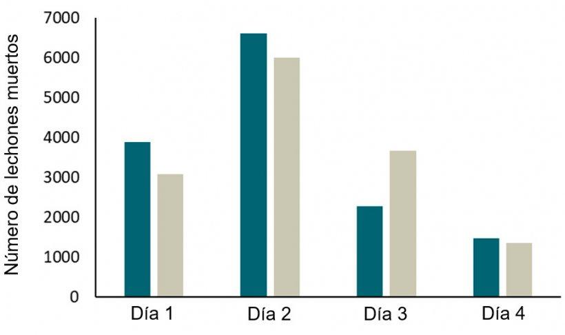Figura 2. Registros (2 años) de mortalidad de lechones en 2 granjas con corrales SWAP. La mayoría de las bajas se produjerondurante los primeros 4 días y, especialmente, durante las primeras 24 h de vida.
