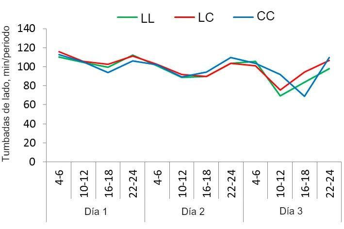 Figura1. Patrón de reposo de las cerdas en el sistema SWAP con 3 estrategias de uso distintas: sin confinamiento, confinamiento tras el parto y durante 4 días (después libres), o confinamiento el día antes del parto y durante 4 días (después libres). El tiempo que las cerdas pasaron tumbadasde lado durante los 3 primeros días de lactación (registrado en periodos de 2 h) en los 3 tratamientos: Libres en parto y lactación (LL), confinadas tras el parto y durante los primeros 4 días de lactación (LC), confinadas un día antes del parto previsto y durante los 4 primeros días de lactación (CC).