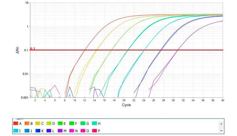 Imagen 2. Amplificación de curvas estándar para PCR cuantitativo. Fuente: Thermo Fisher Scientific Inc.