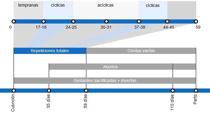 Tipos de pérdidas de gestación que repercuten en una menor tasa de partos, con el detalle de los distintos tipos de repeticiones según en el momento en que se producen