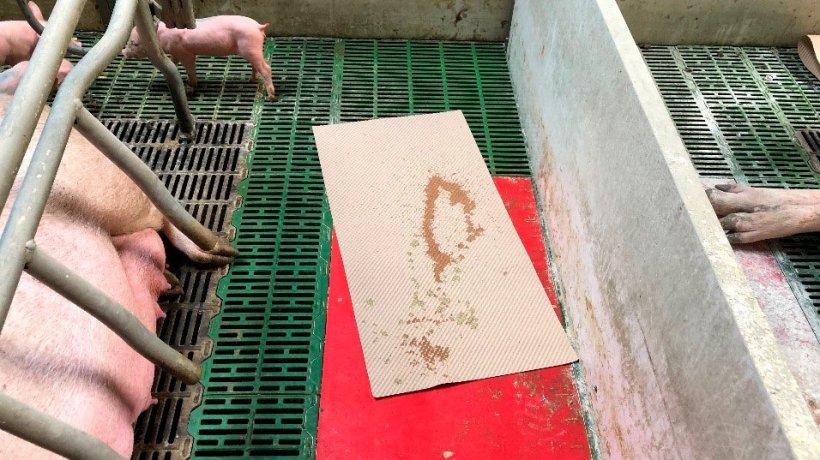 Imagen 1. Un método práctico para recoger diarrea, es usar tapetes de los que se usan para secar y dar confort al lechón tres el parto. Esos tapetes se dejan en la maternidad y si hay diarrea los lechones los mancharán, usándose luego para preparar la mezcla que administraremos a la cerda.
